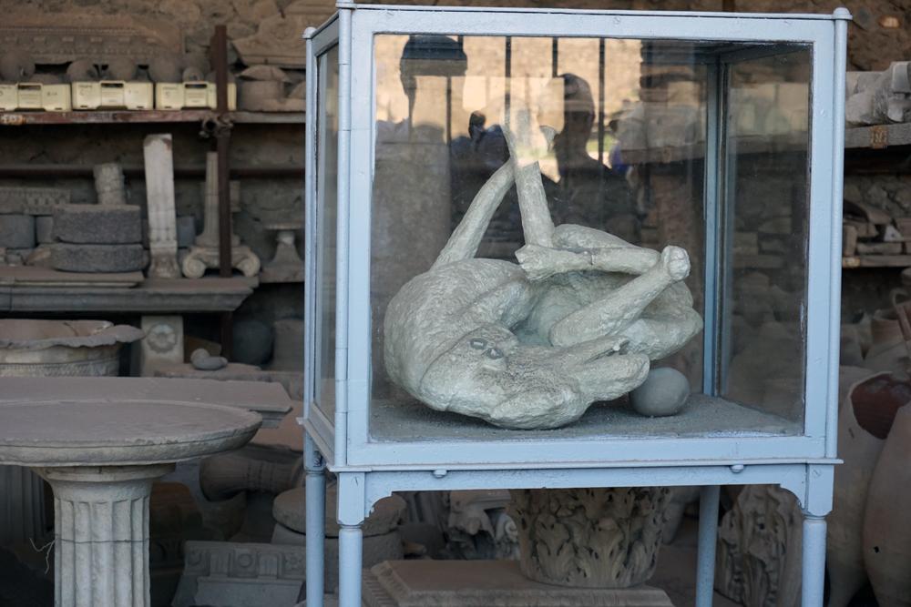 Dog of Pompeii