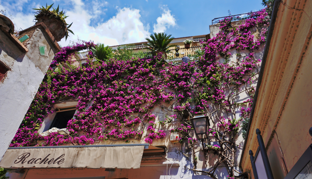 Beautiful flowers cover all houses in Positano, Italy